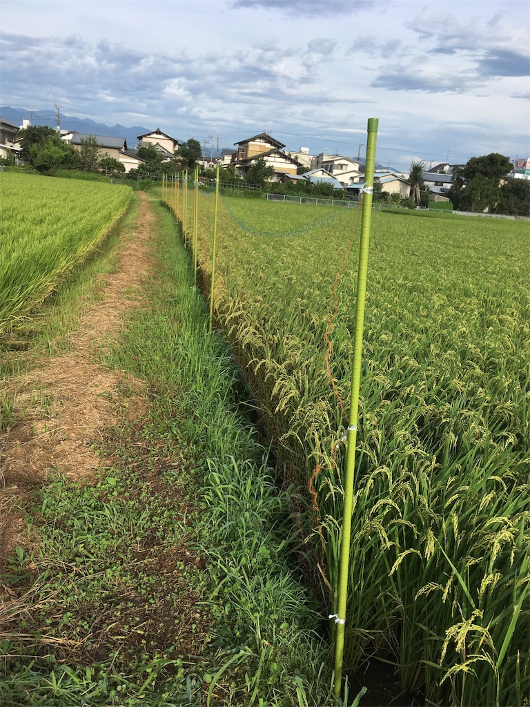 f:id:shimizufarm:20170825075107j:image