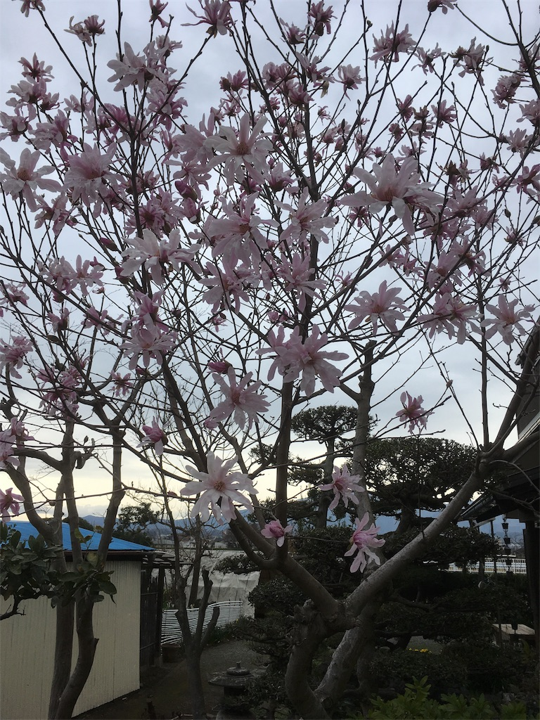 f:id:shimizufarm:20180316120420j:image