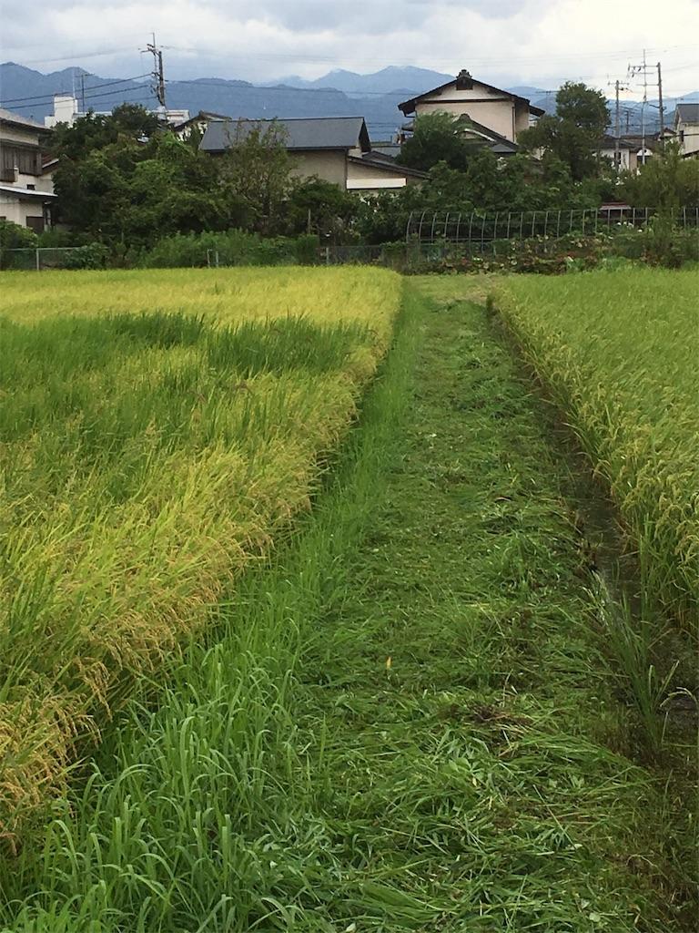 f:id:shimizufarm:20190828201755j:image
