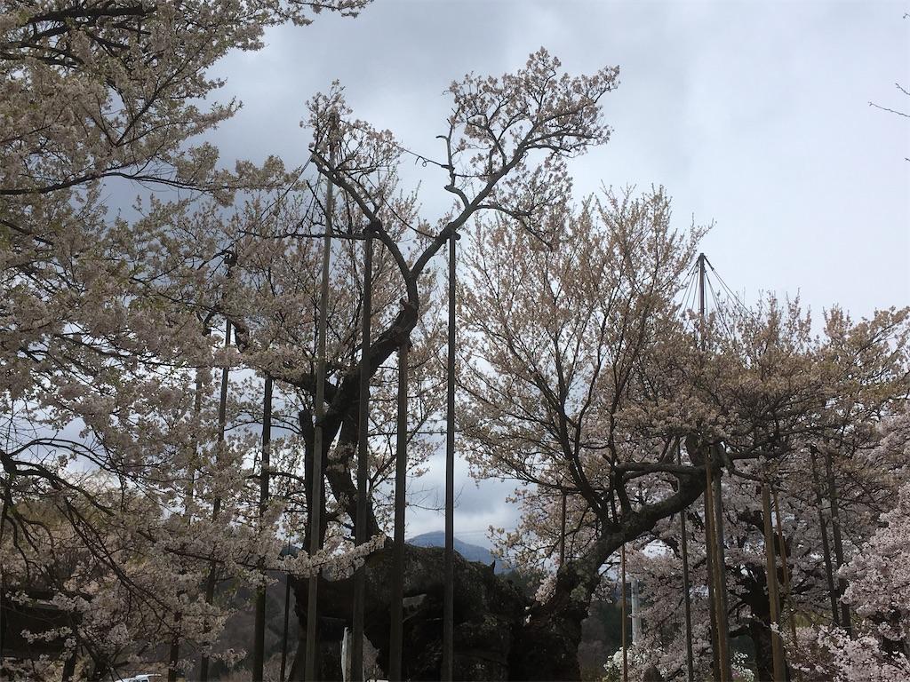 f:id:shimizufarm:20200412102427j:image
