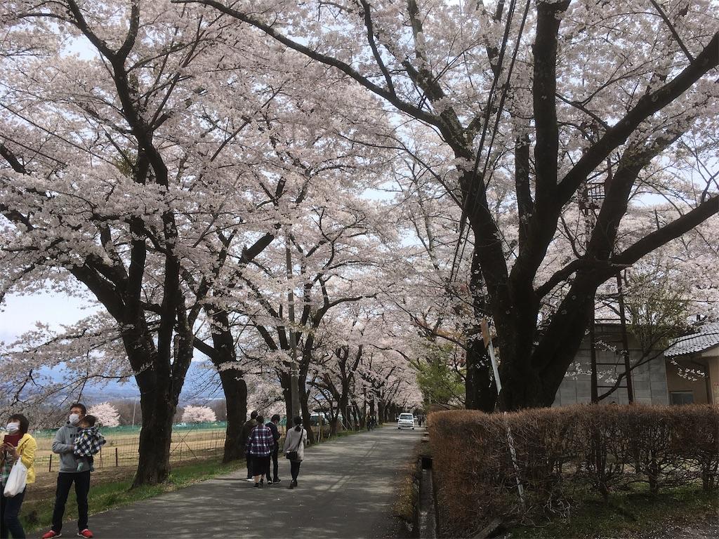 f:id:shimizufarm:20200413085348j:image