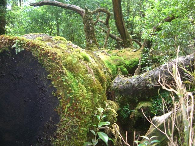 f:id:shimizumasashi:20100903113114j:image