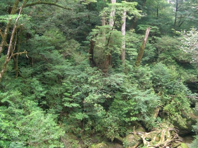 f:id:shimizumasashi:20100903113706j:image