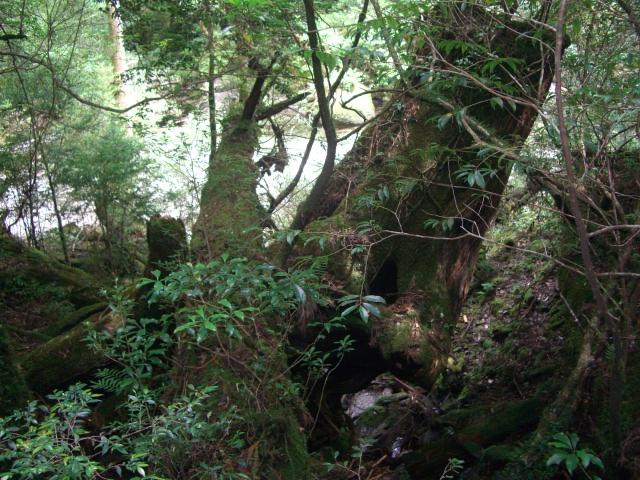 f:id:shimizumasashi:20100903113833j:image