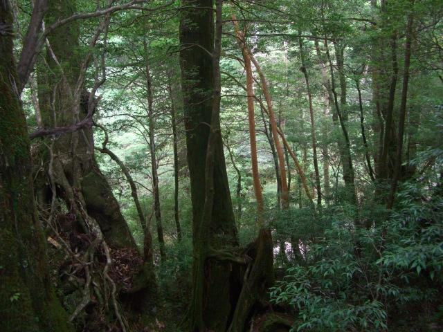 f:id:shimizumasashi:20100903114123j:image