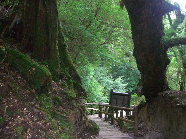 f:id:shimizumasashi:20100903114144j:image