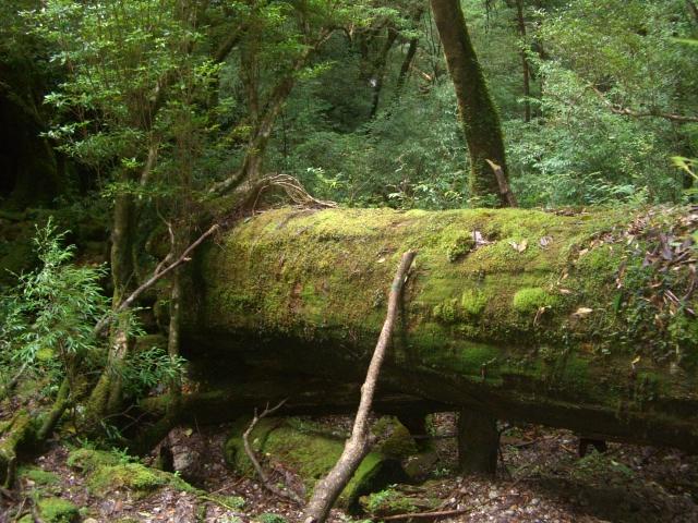 f:id:shimizumasashi:20100903114515j:image