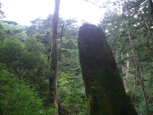 f:id:shimizumasashi:20100903120129j:image