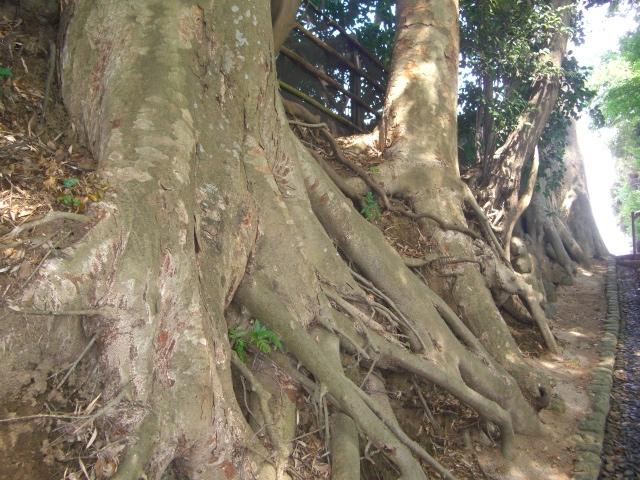 f:id:shimizumasashi:20100912101327j:image