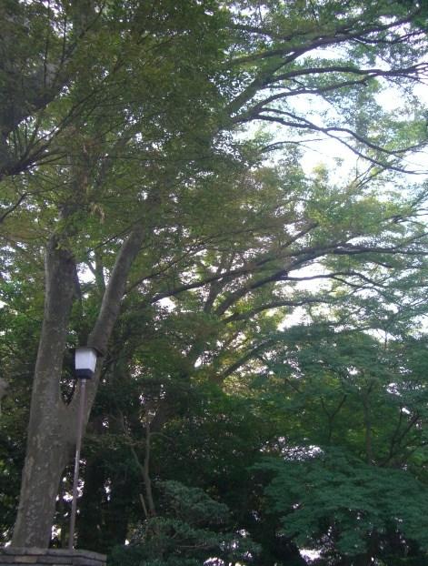 f:id:shimizumasashi:20100912101437j:image