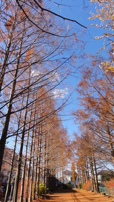 f:id:shimizumasashi:20111217115516j:image