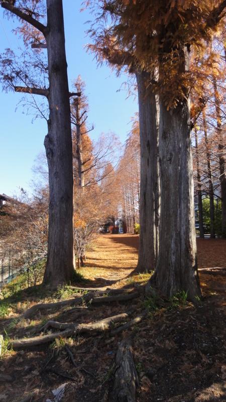 f:id:shimizumasashi:20111217115640j:image