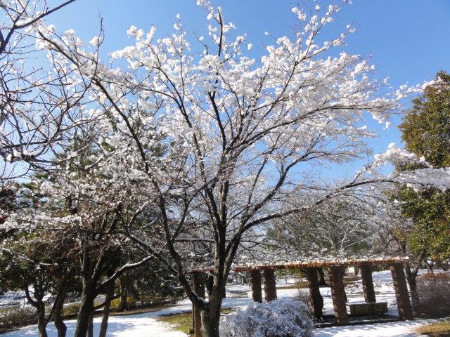 f:id:shimizumasashi:20120124113500j:image