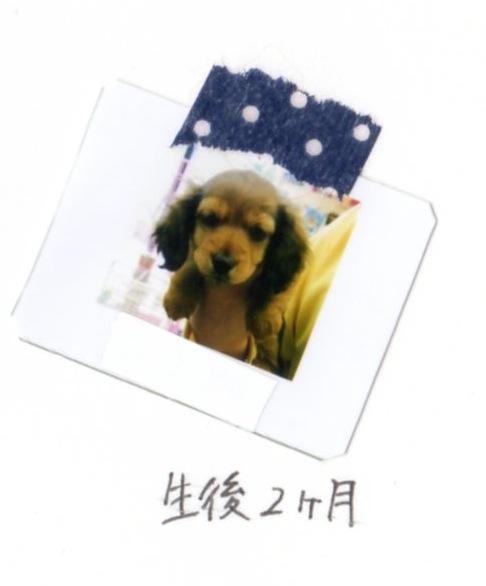 f:id:shimizumasashi:20150414095436j:image