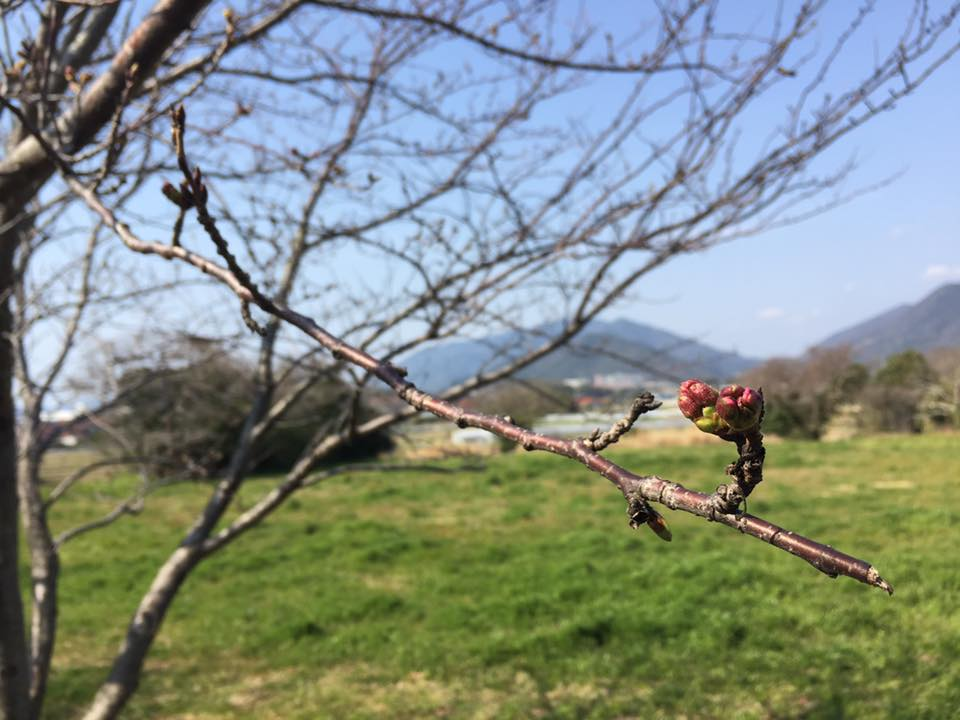 f:id:shimonoseki-kodomo:20170411133546j:plain