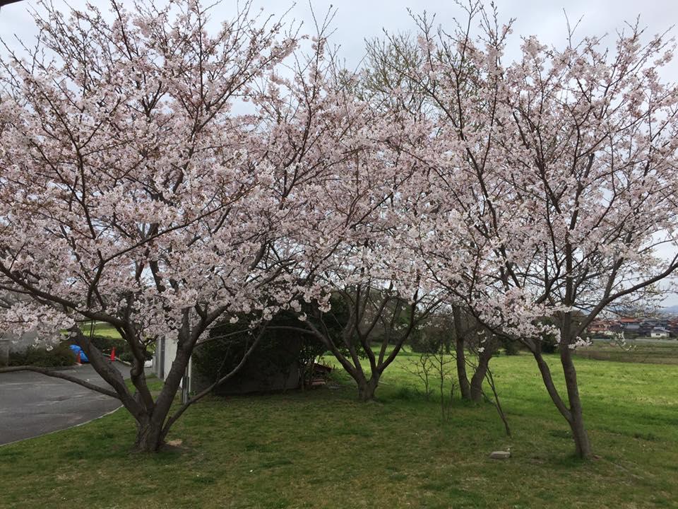f:id:shimonoseki-kodomo:20170411133913j:plain