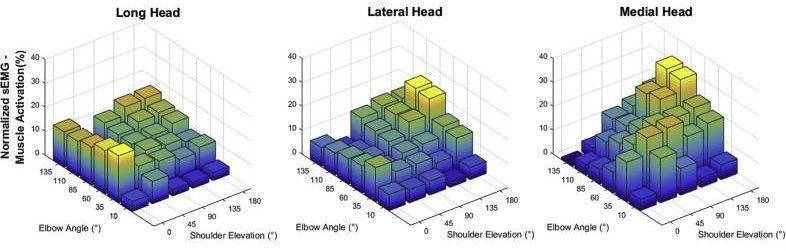上腕三頭筋の腕の角度と筋活動の変化