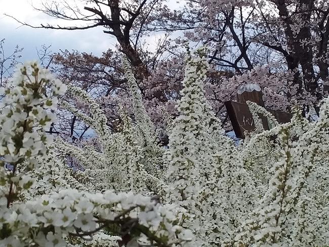 f:id:shimoten:20190417204057p:plain