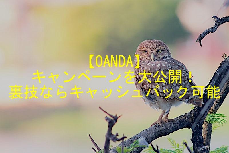 【OANDA】キャンペーンを大公開!裏技ならキャッシュバック可能