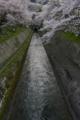 「桜のある風景」    琵琶湖・疏水