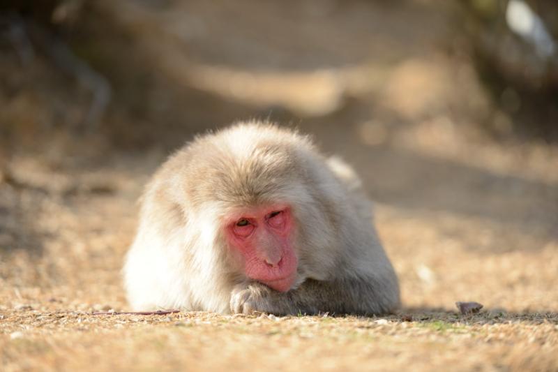 サル 「眠い~~よ」