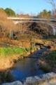 千葉県松戸市_21世紀の森と広場_森の橋