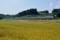 佐倉-酒々井_3931F_E217系快速エアポート成田