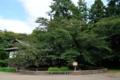 [青森県][弘前市][弘前城][弘前公園]日本最古のソメイヨシノ