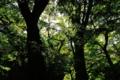 [青森県][弘前市][弘前城][弘前公園][国指定重要文化財]木々の隙間から二の丸_丑寅櫓