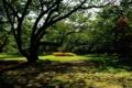 [青森県][弘前市][弘前城][弘前公園]ピクニック広場に射す光