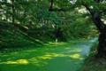 [青森県][弘前市][弘前城][弘前公園]緑に染まる外濠