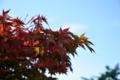 [青森県][弘前市]紅葉が始まる
