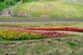 [青森県][弘前市][りんご公園]すり鉢山法面に咲く花
