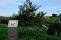 [青森県][弘前市][りんご公園]ニュートンの木(ケントの花)