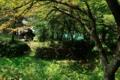 [秋田県][大館市][長走風穴高山植物群落][国指定天然記念物]遊歩道俯瞰