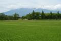 [山形県][酒田市][鳥海山]山形県酒田市上野曽根地区から見た鳥海山