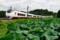 石岡-高浜_E657系特急ひたち15号_カツK7編成(前面保護カバー)
