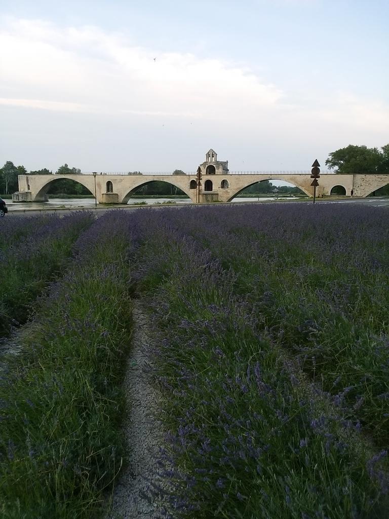 サン・ベネゼ橋(Pont Saint-Bénézet)