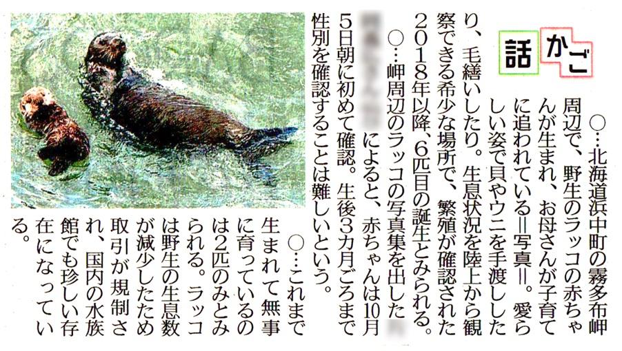 f:id:shinbun-kenkyuujo:20201119100824j:plain