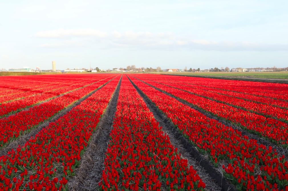 f:id:shinchan-netherlands-belgium:20200222204909p:plain