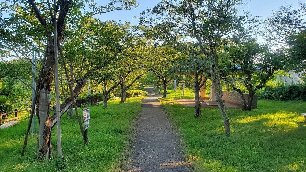 塚山公園・港の見える丘付近