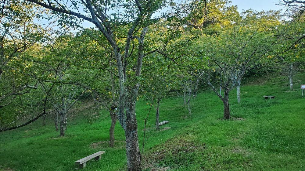 塚山公園・さくら谷