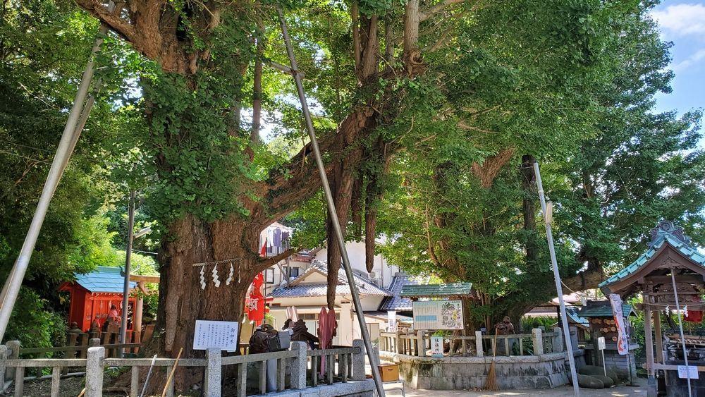 海南神社の境内