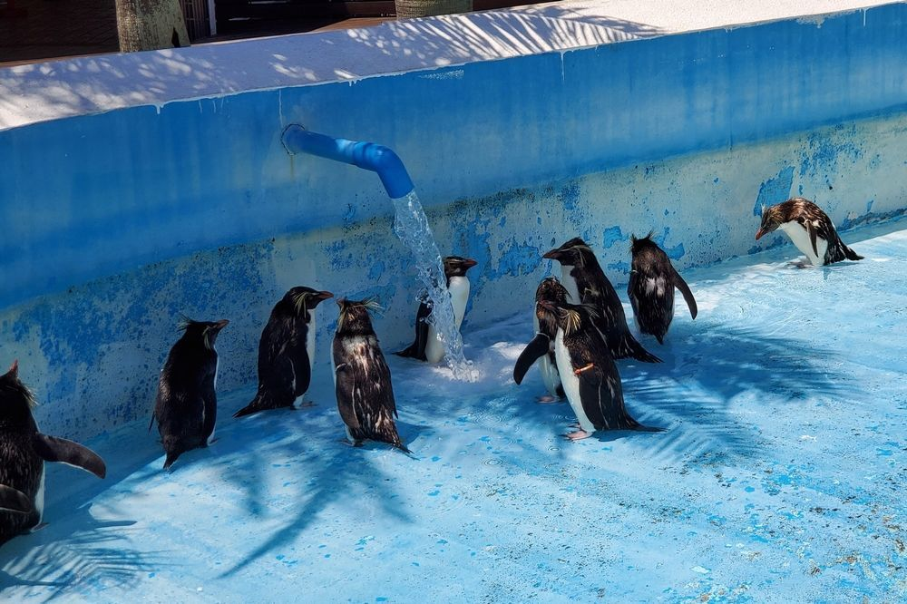 油壺マリンパーク ペンギン島