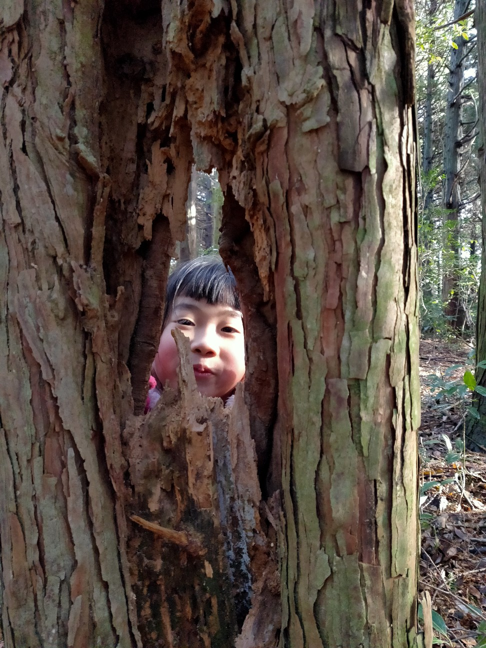 f:id:shingo_shiraishi:20200120213719j:image