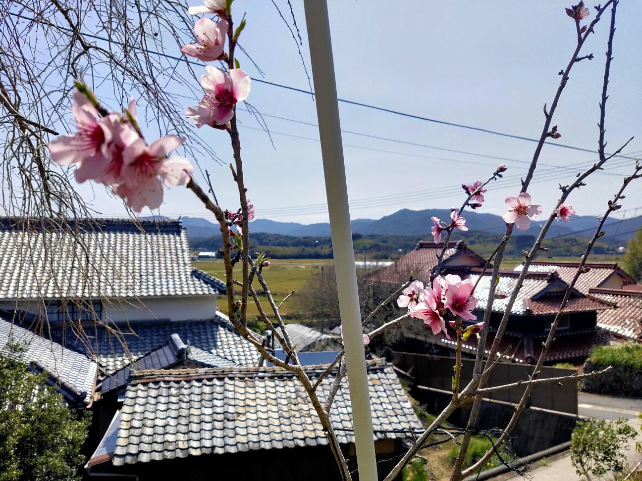 f:id:shingo_shiraishi:20200325210210j:image