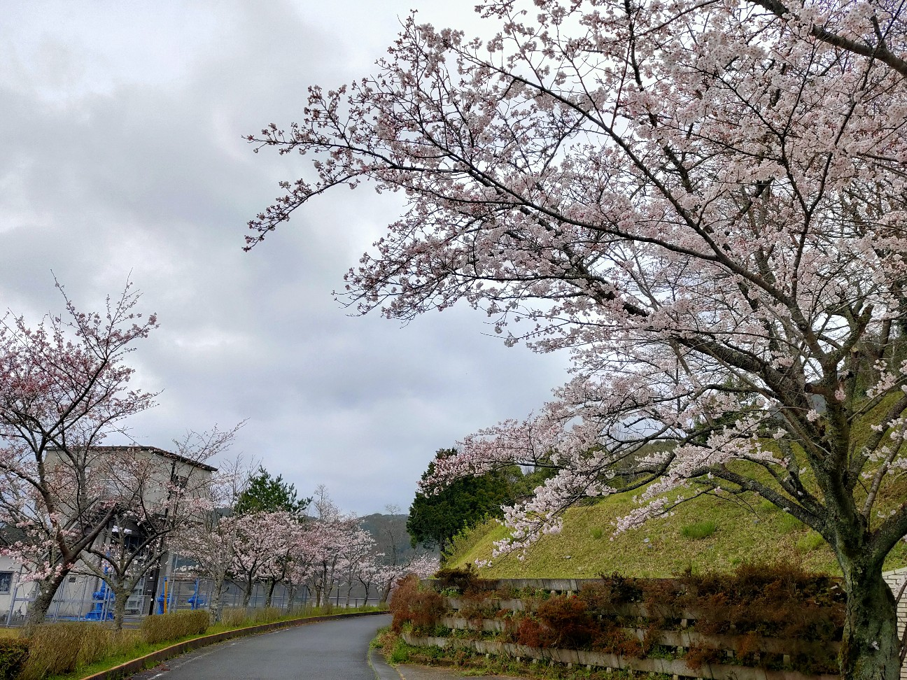 f:id:shingo_shiraishi:20200329200858j:image