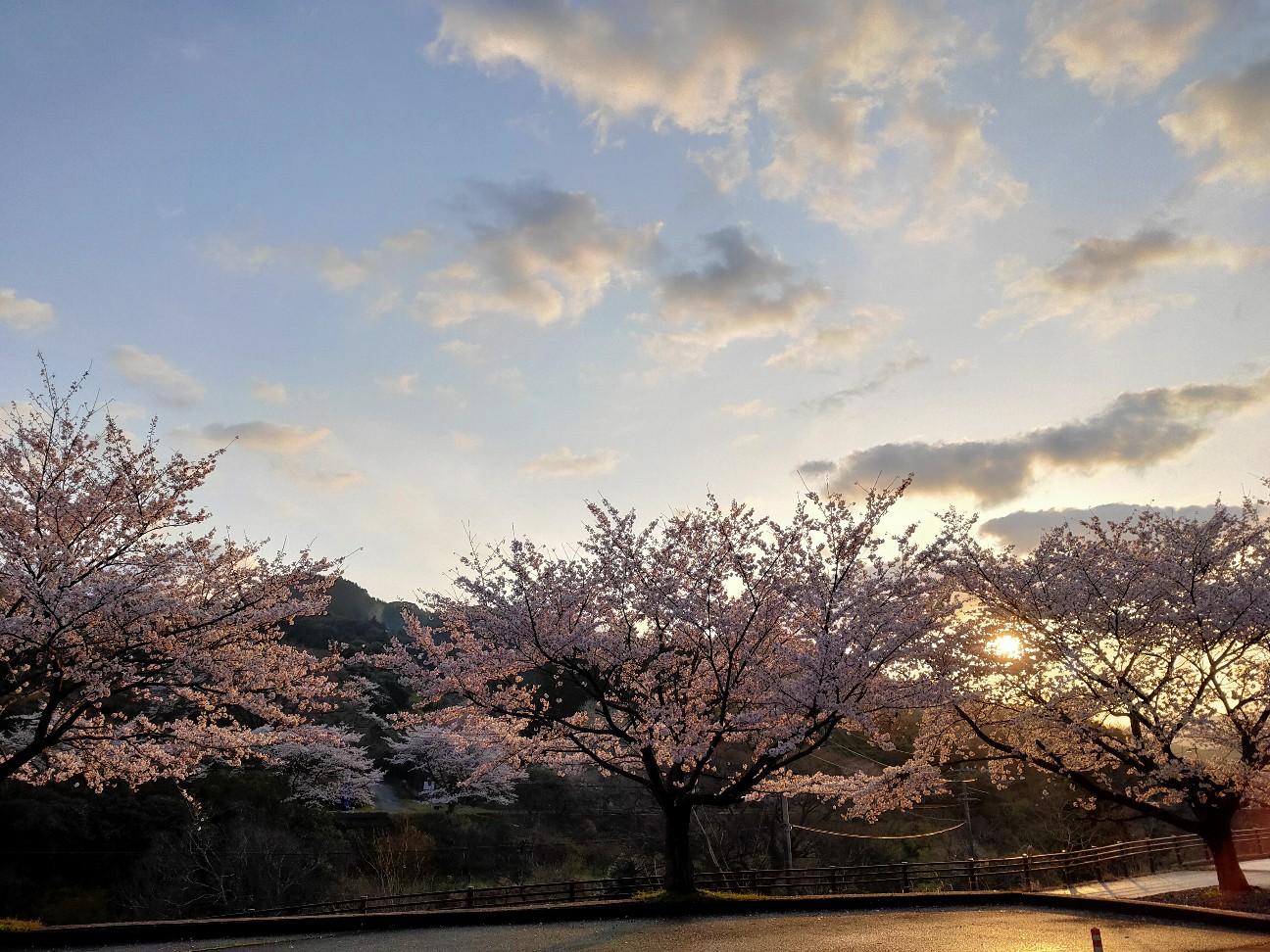 f:id:shingo_shiraishi:20200402212159j:image