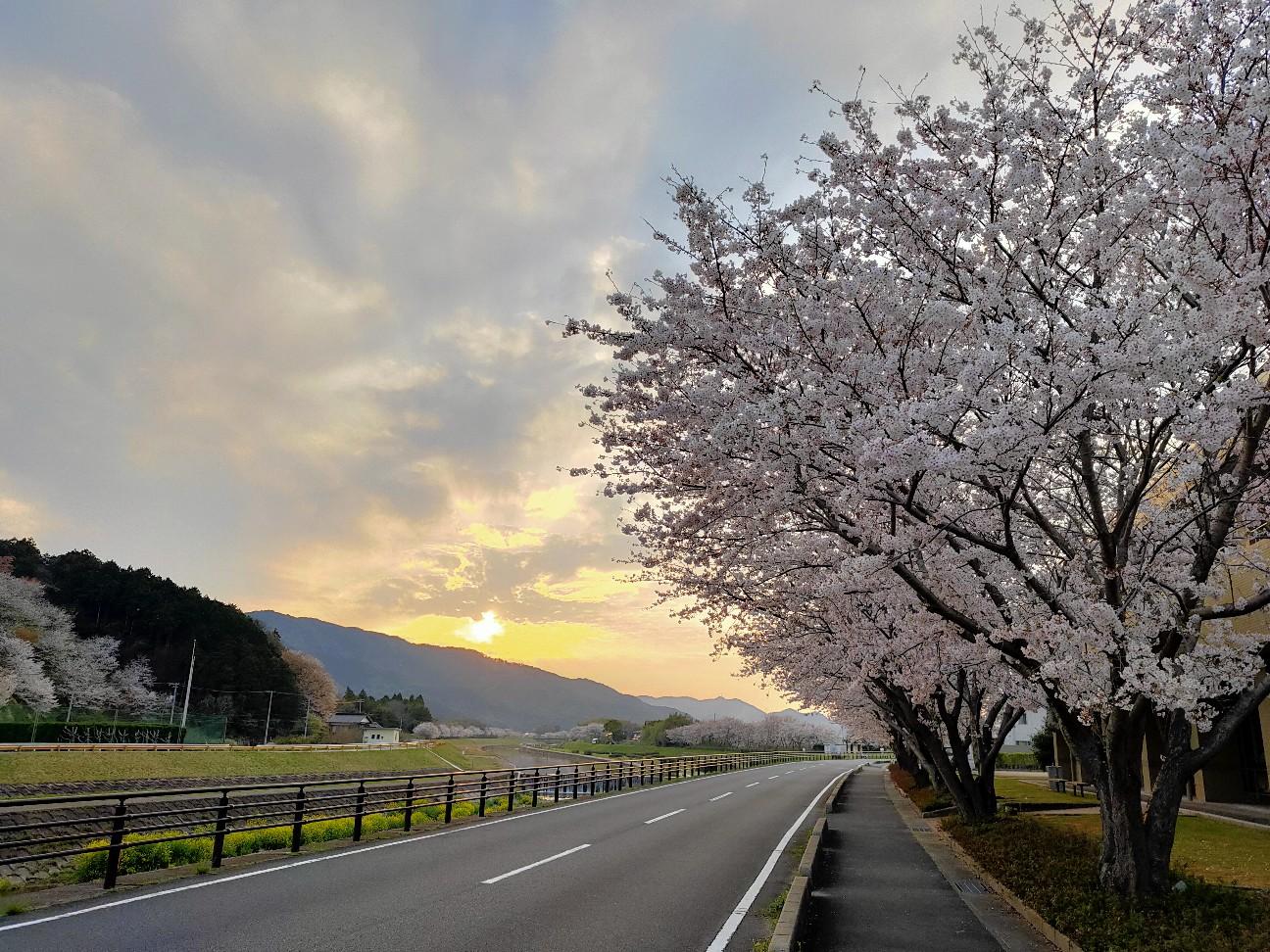 f:id:shingo_shiraishi:20200403213640j:image
