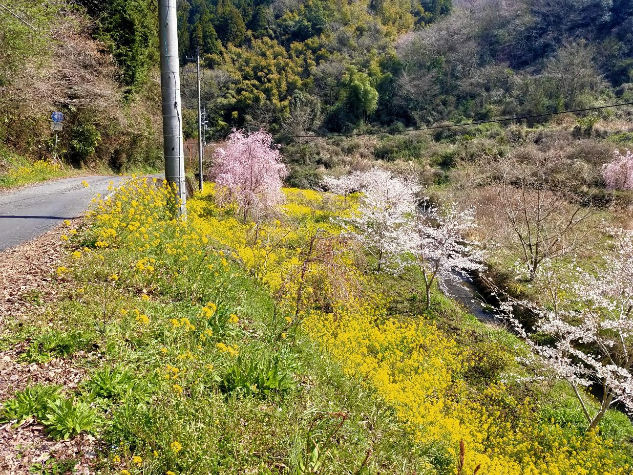 f:id:shingo_shiraishi:20200404172504j:image